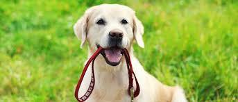 ¿Cuáles son lo beneficios de una buena alimentación para un perro?